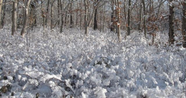 20130214 cold cotton