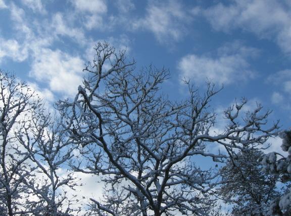 20130214 sky tree