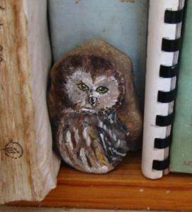 Little Owl nestled among the cookbooks