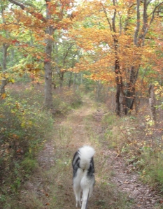 "Fuzzy Butt and I head off down Pine Hill. ""My name is not Fuzzy Butt!"" he says."