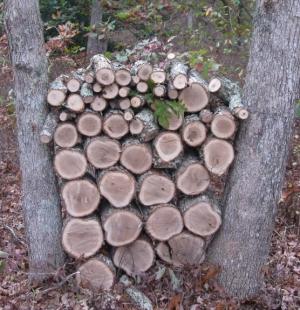 20131014 log stack 2