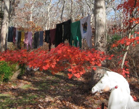 horsehead laundry
