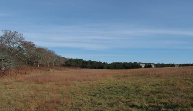SMF field