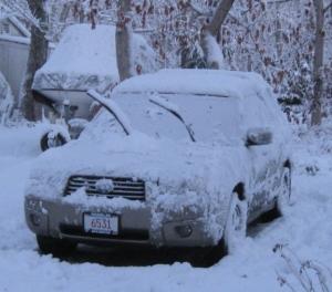 Snowy Malvina