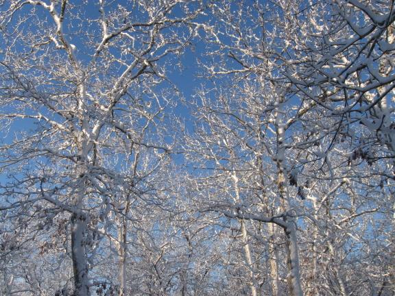 20140216 trees