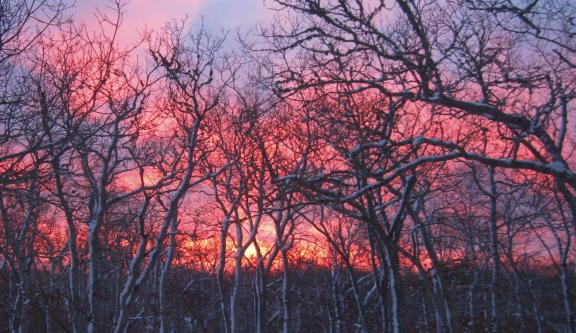 20140218 sunrise 2
