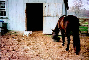 As a puppy Trav spent a lot of time at the barn. Here he is with big sister Allie at Malabar Farm.