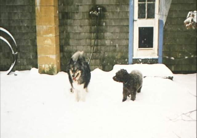 Rhodry and his friend Rosie in the snow