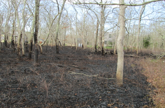 The firefighters held the line. At the far left through the trees is the nursery school. The house to the right belongs to the housing authority.