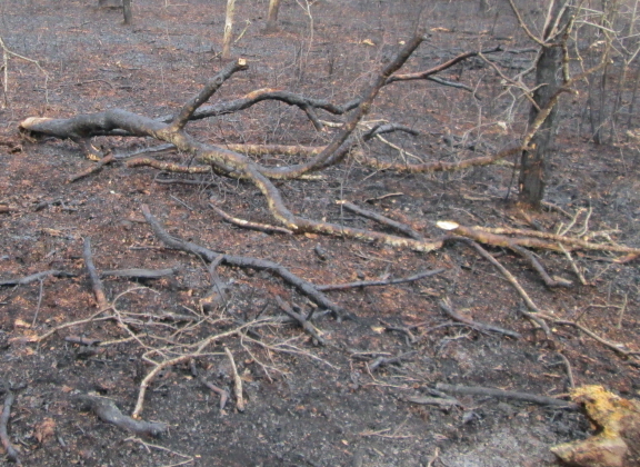 scorched branches