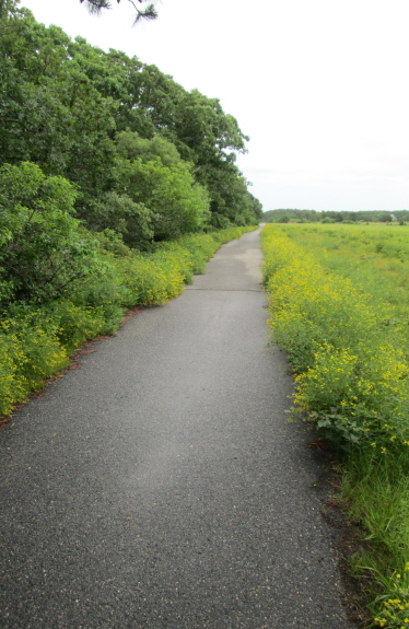 The bike path is more crowded than in the off-season, but bikers, runners, joggers, and walkers move at a manageable speed, and most of them are friendly.