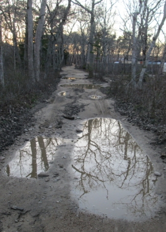 "A ""good"" stretch of the Dr. Fisher Road during mud season. Most Vineyard roads don't look like this."