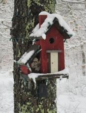 20150305 bird house