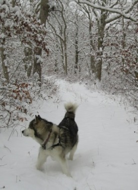 20170106-snowy-trail-1