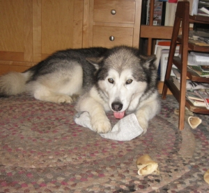 Travvy lying down with sock