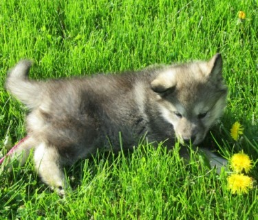 puppy on green grass