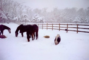 horses and dog in snowy pasture